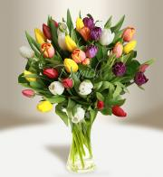 Bouquet of tulips (mixed) - Flowers delivery in Prague